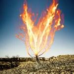 The burning thorn bush — Stock Photo #21696195