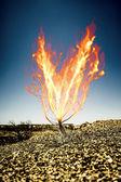 The burning thorn bush — Stock Photo