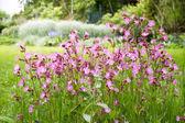 Nice garden flowers — Stock Photo