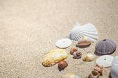 貝殻や砂 — ストック写真
