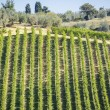 Stock Photo: Wine Hill Italy