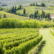 Wine Hill Italy — Stock Photo