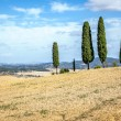 Tuscany Cypress — Stock Photo