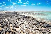Estromatolitos australia — Foto de Stock