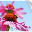 Paper picture illustion of a bumblebee on coneflower - Stock Photo