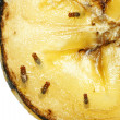 Stock Photo: Fruit flies on rotting banana