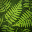 Fern paper background — Stock Photo