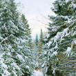 Winter forest landscape — Stock Photo #18388273