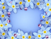Blue flower frame — Stock Photo
