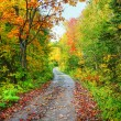 Path in colorful fall forest — Stock Photo