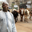 African cattle farmer - Stock Photo