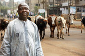 African cattle farmer — Stock Photo