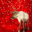 Stock Photo: Caribou reindeer on red