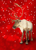 Caribou reindeer on red — Stock Photo