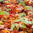 Colorful fall forest floor — Stock Photo
