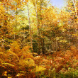 Beautiful yellow leaves fall forest — Stock Photo