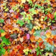 Orange and red leaves on ground — Stock Photo #32364715