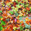 Orange and red leaves on the ground — Stock Photo