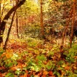 Enchanted forest — Stockfoto #33516625