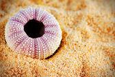 Sea urchin shell on sand — Stock Photo