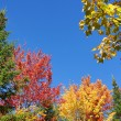 Colorful autumn nature — Stock Photo