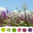 Stock Photo: Beautiful wildflowers color palette