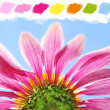 Under a coneflower color palette — Stock Photo