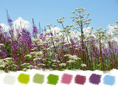 Beautiful wildflowers color palette — Stock Photo