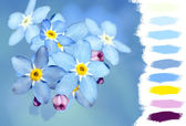 Forget-me-not flower color palette — Stock Photo