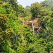 African rainforest — Stock Photo