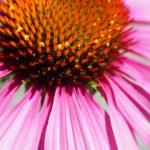 Pembe çiçek makro — Stok fotoğraf #45291405