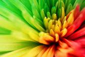 Multicolored flower — Stock Photo