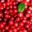 Cowberry — Stock Photo #17347619