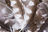Feather background — Stock Photo