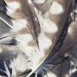 Stock Photo: Feather background