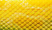 Skin of a snake — Stock Photo