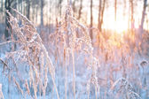 Sunset in winter — Foto Stock