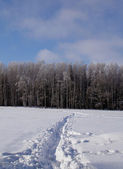 Winter's path — Foto de Stock