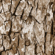 Royalty-Free Stock Photo: bark