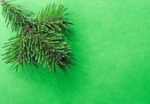 Branch of pine — Stock Photo