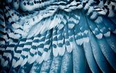 Bird's wing — Stock Photo