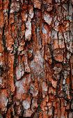 Bark of old tree — Stock Photo