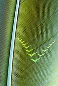 Pen feather — Stock Photo