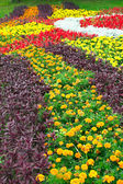 Tagets на цветник — Стоковое фото