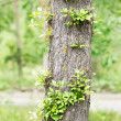 Stock Photo: Linden-tree trunk with new sprigs