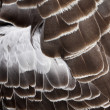 Stock Photo: Bird's plumage background