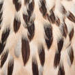 Stock Photo: Plumage background