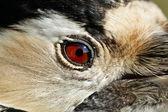 Portrait of the Woodpecker — Stock Photo