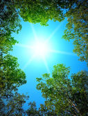 Sun into a forest — Foto Stock