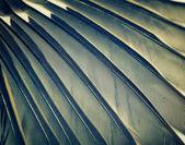 Wing — Stock Photo